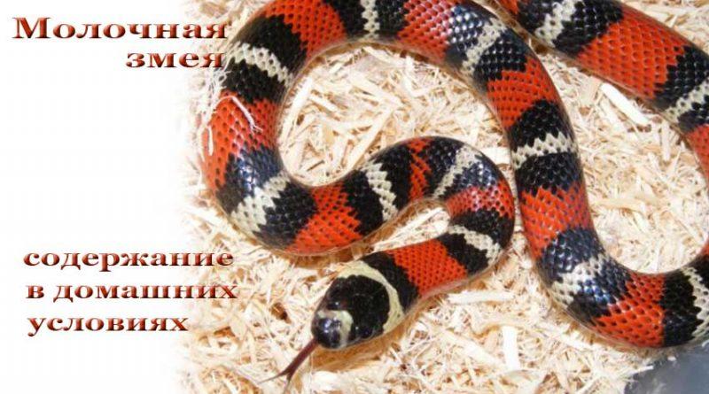Условия содержания змеи в домашних условиях 956