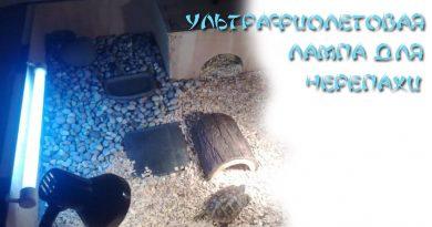 Ульрафиолетовая лампа для черепахи