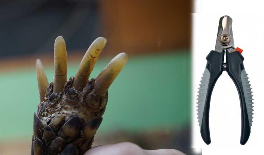 когти черапахи