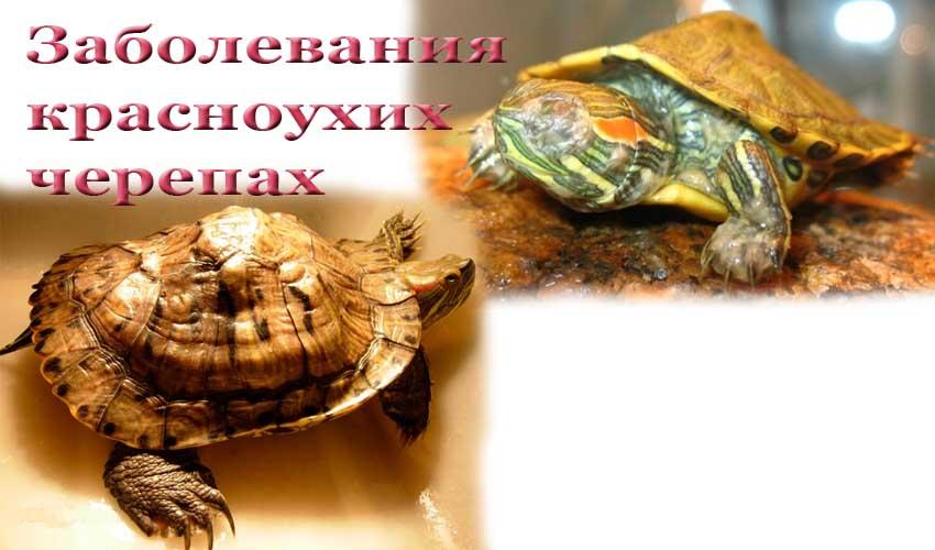 Чем мыть красноухую черепаху в домашних условиях 711