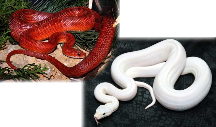 Как сделать домашнего змея 201