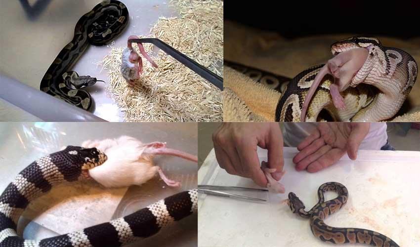 Как сделать домашнего змея 204