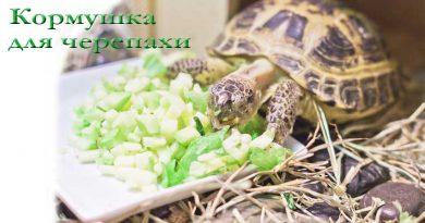 кормушка для черепах