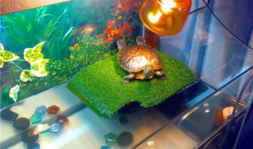 Островок для красноухой черепахи своими руками (фото) 43