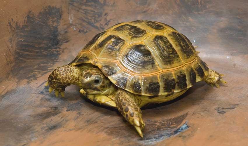 выбрать черепаху