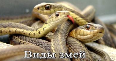 виды змей