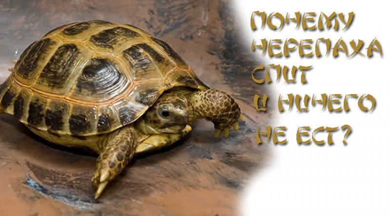 Почему черепаха спит