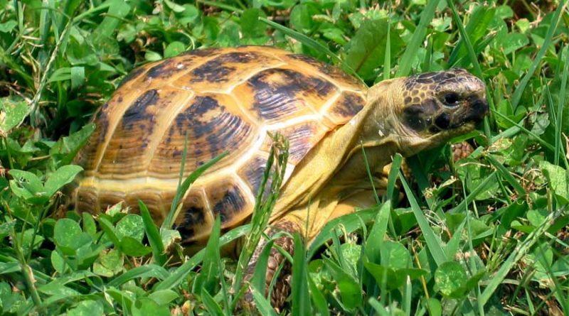 потерялась черепаха