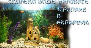 Сколько воды наливать черепахе в аквариум
