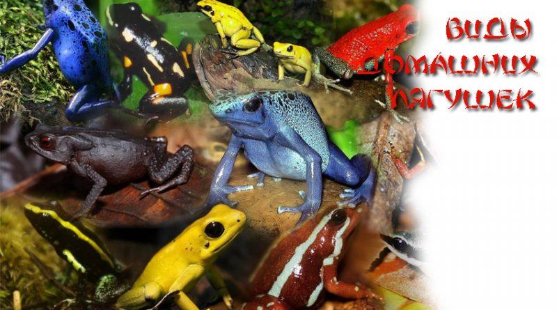 Виды домашних лягушек