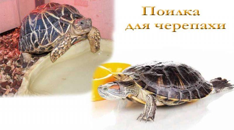 поилка для черепах